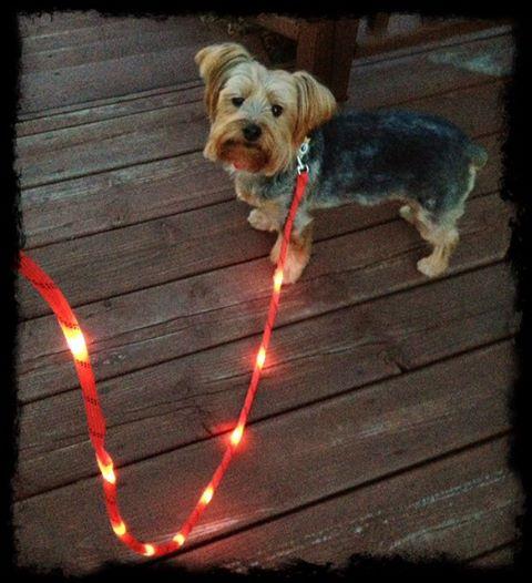 Litey Leash The Super Cool Led Light Up Dog Leash 13